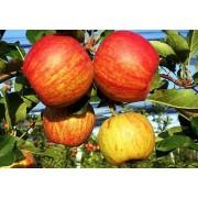 Măr Generos