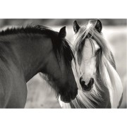 Puzzle Dino - Black and White Horses, 1.000 piese (62965)