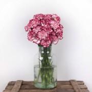 Rhapsody - Flores a domicilio
