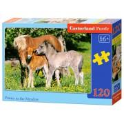 Selecta Pony's in het Veld (120)