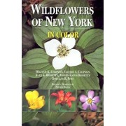 Wildflowers of New York in Color, Paperback/William K. Chapman
