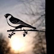 Geluksvogel Goudvink