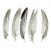 Merkloos Decoratie fazant veren 13 cm 5 stuks