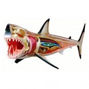 Tedco 4D Vision Great White Shark Anatomy Model
