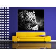 Tablou leopard alb negru - cod G29