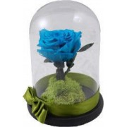 Trandafir criogenat in cupola MagazinulCuPlante.ro 21 cm Albastru