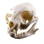 Cat Skull Bone Resin Statue Figurine Model for Aquarium Fish Tank Ornament