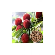 ELECTROPRIME® GT 10 Particles/Bag Arbutus Unedo Strawberry Tree Delicious Chinese Fruit Seeds for Healthy and Home Garden Easy Grow GN