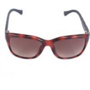 Calvin Klein Retro Square Sunglasses(Brown)