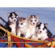 Puzzle Catei Husky, 500 piese, RAVENSBURGER Puzzle Adulti