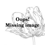 ESSENZA Aylin Duvet cover 1p set 135x200+80x80 White