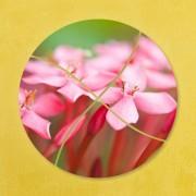 Tablouri flori delicate - Roz sublim