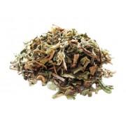 Chá Dente de Leão em planta (Taraxacum officinale L.)