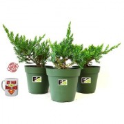 JONIPAR COMBO OF 3 PEICE NATURAL PLANT With Freebies Mug