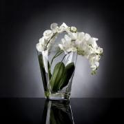 Aranjament floral TROPICAL PLANT