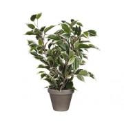 Planta artificiala, Ficus natasja, mix nuante verde