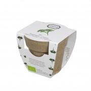 Dille&Kamille Mini-persil biologique en pot