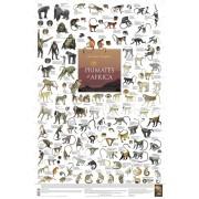 Primates of Africa