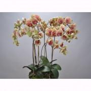 Aranjament floral ORCHID O/SOIL PINK 83cm