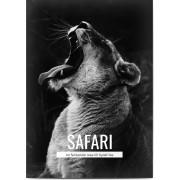 Optimalprint Fotoaffischer djur, 1 st, djur, lejon, affisch, safari, vit, Optimalprint