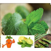 Ceai de plante Lemon peppermint