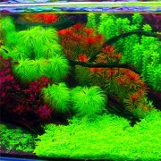 Meco Egrow 1000 PCS Aquarium Plant Seeds Pine Tree Semillas Raras Plantas Aquatic Fish Tank Decoration Trees Seeds