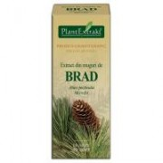 Extract din muguri de brad - abies pectinata mg=d1 50ml PLANTEXTRAKT