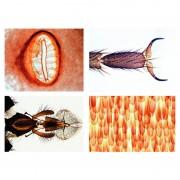LIEDER Insectes, série élémentaire (25 préparations)