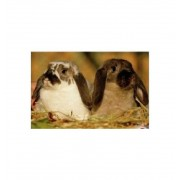 Puzzle 150 Photo animales - Diset