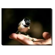 Tablou Canvas Feeding the Bird