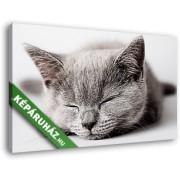 Alvó szürke cica (40x25 cm, Vászonkép )