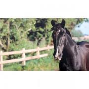 Deurmat paard