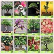 Bonsai Suitable Seeds : Bonsai Suitable Plant Seeds For New Home Combo Thuja Orientalis Albizia Lebbeck Eucalyptus Bamboo Gulmohar Jacaranda Albizia Saman Apple Lemon Garden Seeds Pack By Creativefarmer