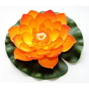 Velda Drijvende Vijverplant Lotus Oranje 20 cm