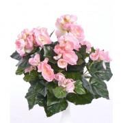 Bellatio flowers & plants binnenplant Begonia roze 30 cm