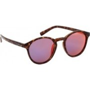 Polaroid Round Sunglasses(Pink, Violet, Red)