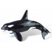 Balena Orca