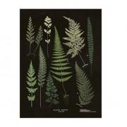 Sköna Ting Poster Växter Svart