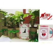 ES WEDDING AND PARTY GIFT SILGONIUM LIVE PLANT With Gift Anniversary Gift Mug