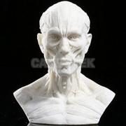 ELECTROPRIME® 10cm Human Model Anatomy Skull Head Muscle Bone Medical Artist Drawing Beige