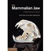 The Mammalian Jaw: A Mechanical Analysis