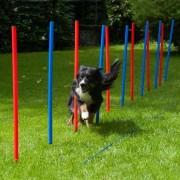 PROCYON Dog Agility Slalom