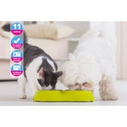 International Open Academy £12 (from International Open Academy) for a pet nutrition CPD certified online course