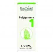 Polygemma nr.1 Stomac
