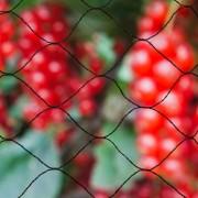 """Nature Мрежа срещу птици """"Primo"""", 10х10 м, черна, 6030407"""