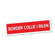 Border Collie i Bilen Klisterdekal