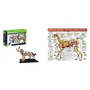 2 Pcs Bundle: Tedco 4D Vision Dog Anatomy Model Comes With The Dog's Body Systems - A Double-Sided Dog Anatomy Chart: A Learning and Teaching Chart For Veterinary Professionals and Dog Lovers