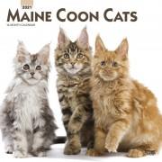 Merkloos Maine Coon katjes/poesjes 2021 dieren wandkalender