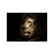 Styler Obraz Styler Glas Animals Lion, 70 x 100 cm