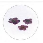 Flores Secas Color-001